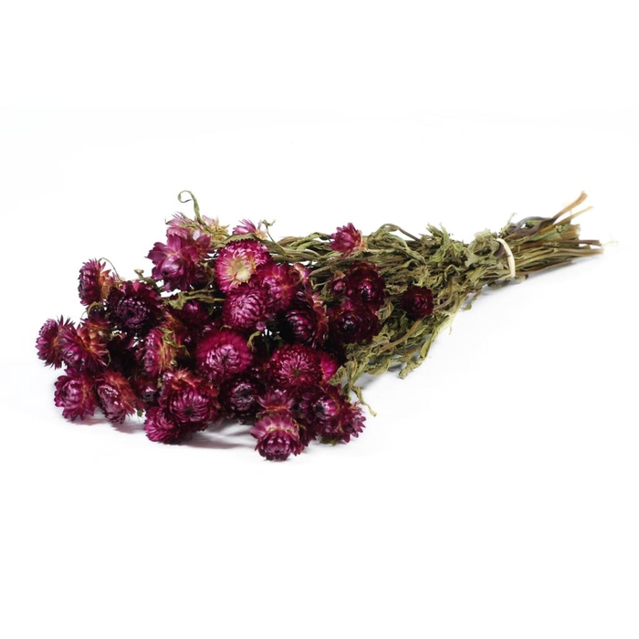 <h4>Helichrysum d.pink natural</h4>