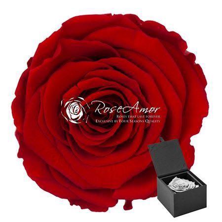 <h4>Pr 9.3 Giftbox Red-02 Xxl Gb2</h4>