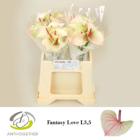 <h4>ANTH A FAN LOVE 40 L3,5.</h4>