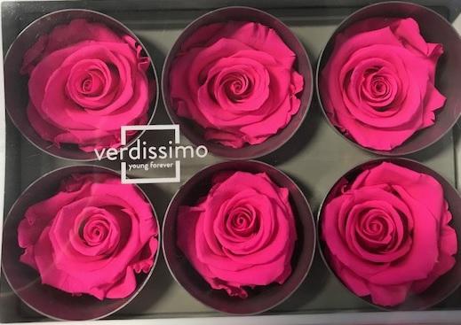 <h4>Roos standard bright pink</h4>
