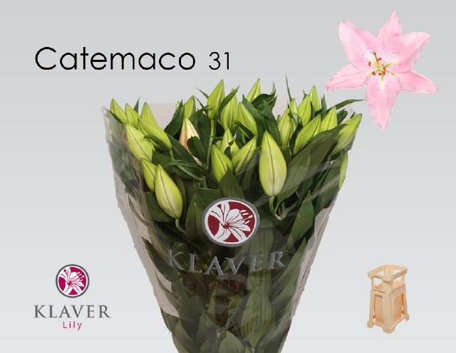 <h4>LI OR CATEMACO</h4>