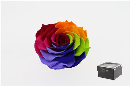 <h4>Pr 5.4 Rainbow Red-02 Xxl</h4>