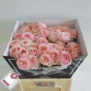 <h4>Rose jardím Ang.Rom.Sweet</h4>