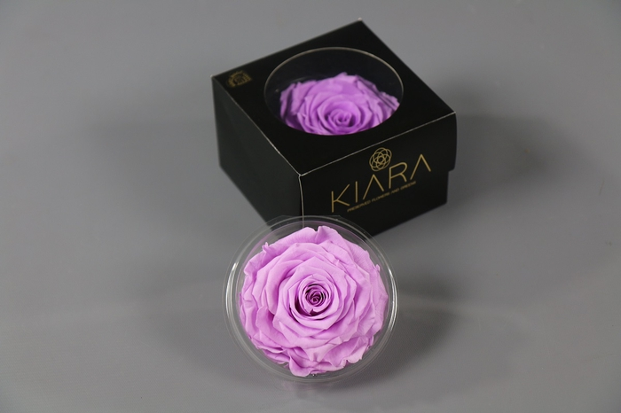 <h4>Rosa Preserved Baby Lily Solitarie</h4>