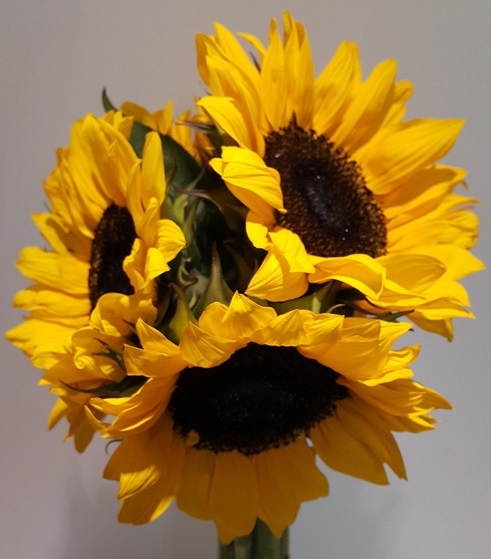 <h4>Sunflower</h4>