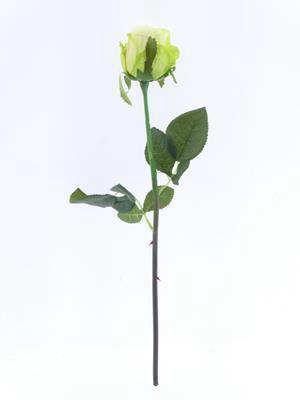 <h4>Af Oxford Rose Bud Light Green</h4>