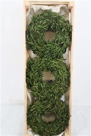 <h4>Wr Salvia Naturel 25cm</h4>