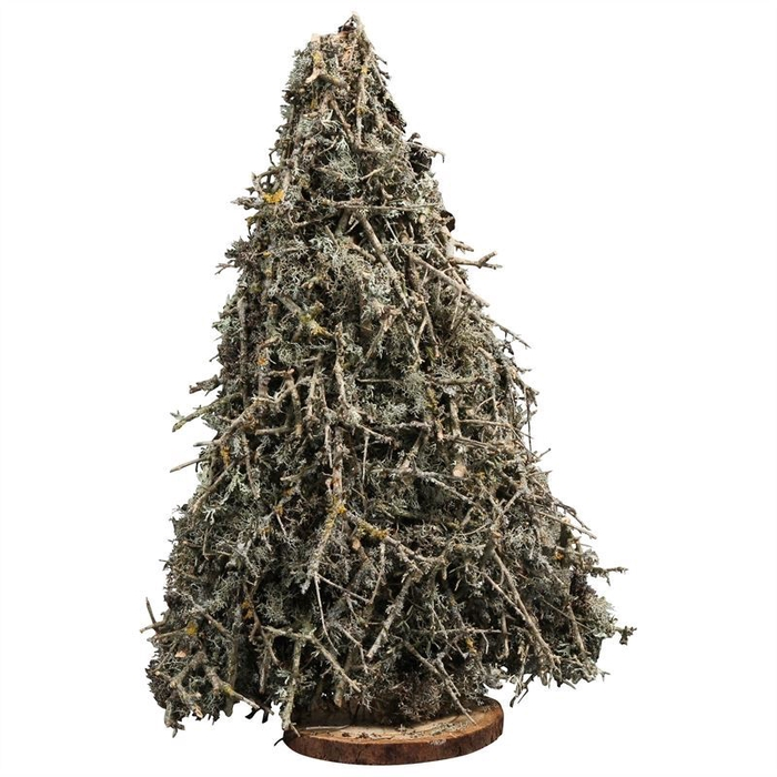 <h4>LARIKS TREE MOSS FLAT H50CM NATURAL</h4>
