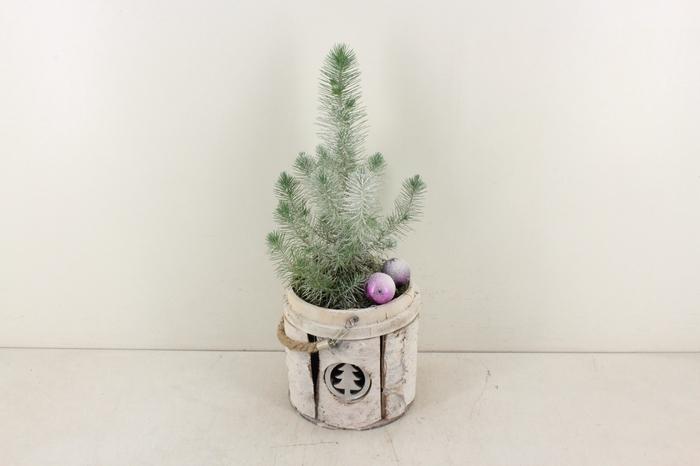 <h4>arr. PL - Berk rond kerstboom</h4>