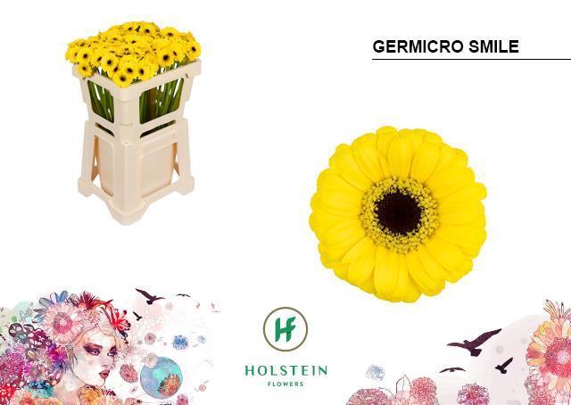 <h4>GE MS GERMICRO SMILE</h4>