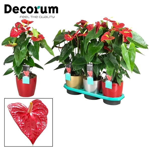 <h4>Anthurium Dakota pot 17 keramiek goud/zilver/rood</h4>
