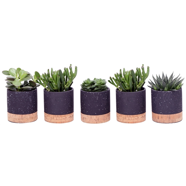 <h4>Little lizard greens succulenten in cork pot</h4>