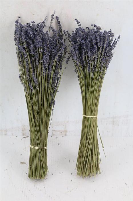 <h4>Dried Lavendel Super Blue 100gram</h4>