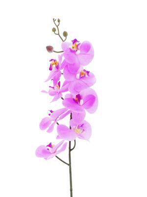 <h4>Af Phalaenopsis 88cm Pink</h4>