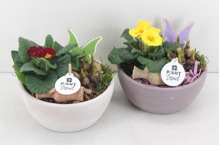 <h4>arr.. Primula PL - Keramiek mix</h4>