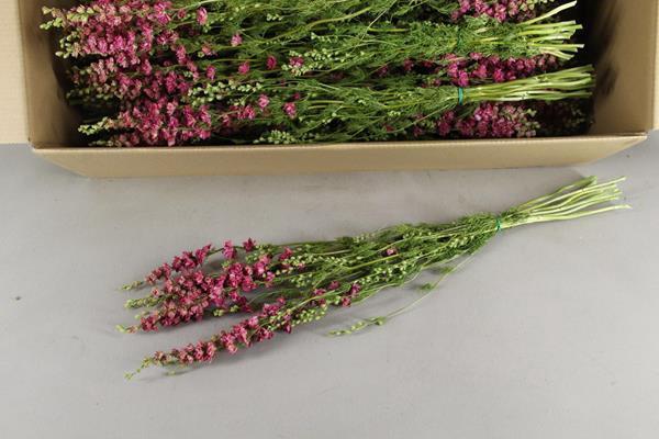 <h4>Df Delphinium Pink Bs 50 Gram</h4>