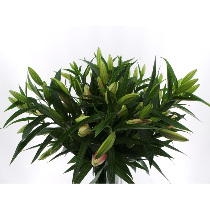 <h4>Bouquet Mono Lelie Oriental Roze x5 60cm</h4>