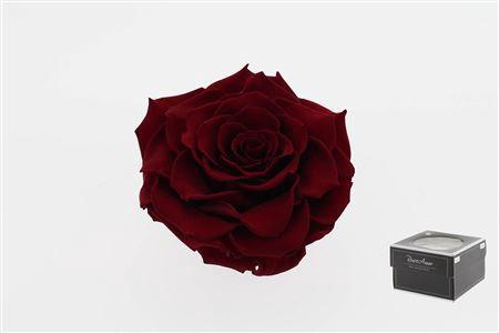 <h4>Pr 5 Red-01 Bonita Xxl</h4>