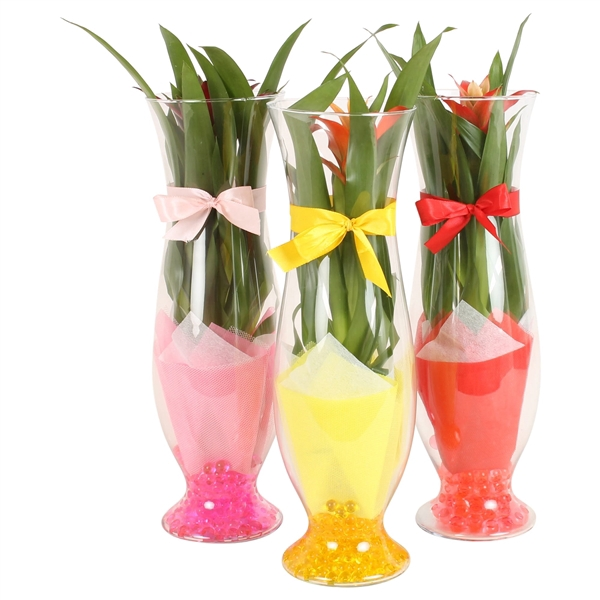 <h4>Tapered glass Small 16cm with arr Guzmania and gelpearls</h4>