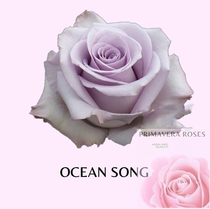 <h4>R GR OCEAN SONG</h4>