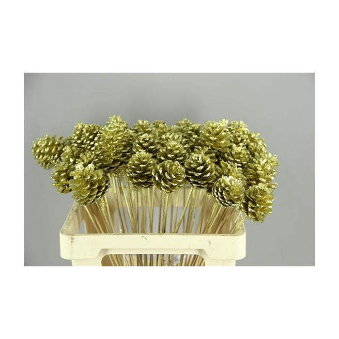 <h4>Stick Pine Cone Gold</h4>