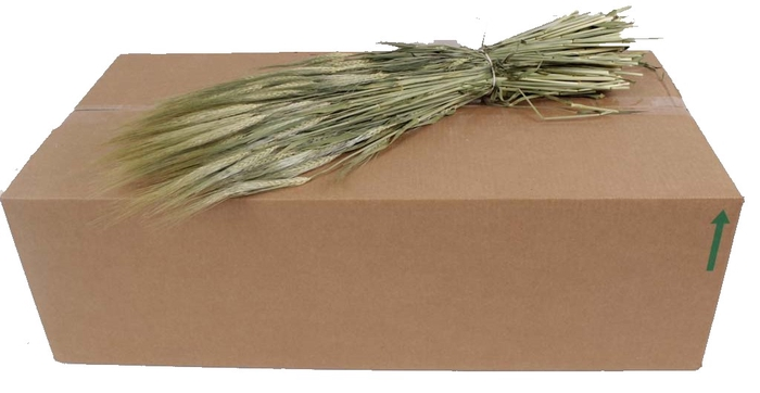 <h4>Hordeum per bunch Natural</h4>