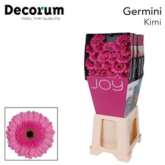 <h4>Ge Mi diamond Kimi</h4>