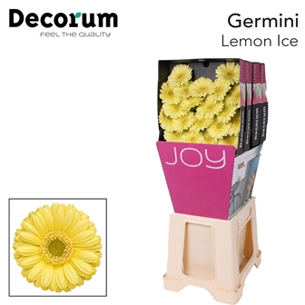 <h4>Ge Mi diamond Lemon Ice</h4>