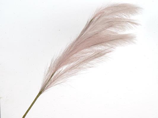 <h4>Af Pampas 100cm Lilac</h4>
