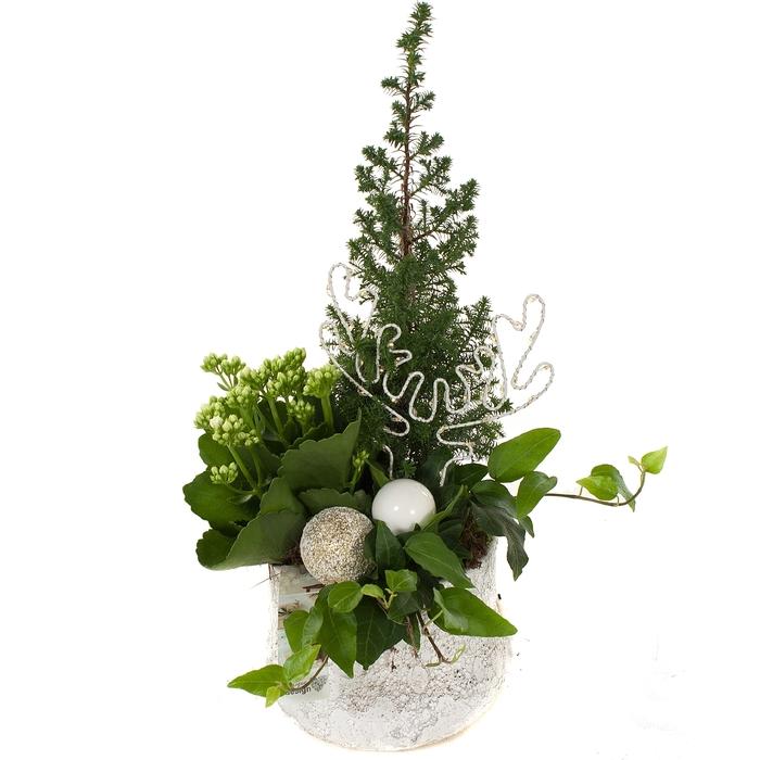 Arr.   Planten H%