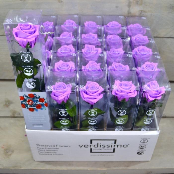 <h4>R PR Amorosa Mini Bright Lilac</h4>