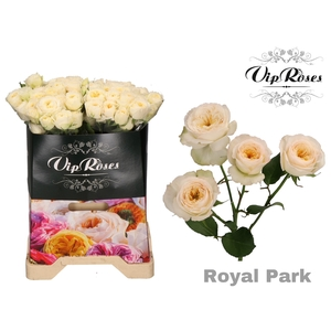 R TR ROYAL PARK