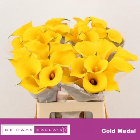 <h4>ZANT GOLD MEDAL</h4>