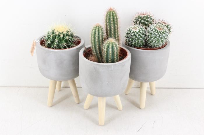 <h4>arr.. Cactus UB0216 - Ker. pootjes L</h4>