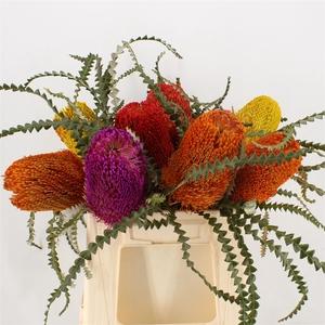 Banksia Speciosa Mixed Colours