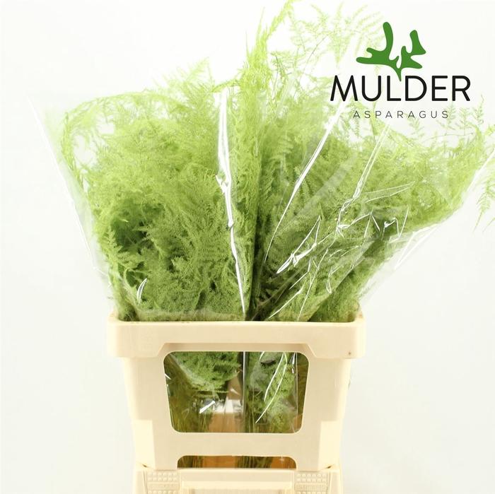 <h4>65cm Extra V. Mint Green</h4>