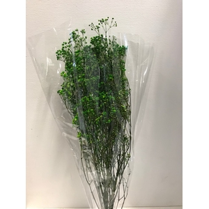 Gypsophila on stem 60gr groen
