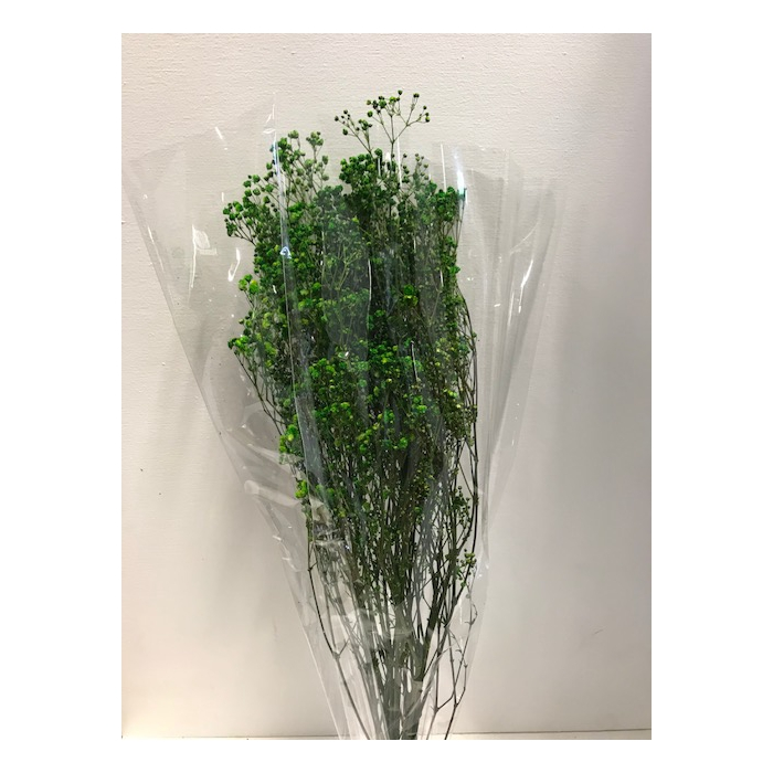 <h4>Gypsophila on stem 60gr groen</h4>