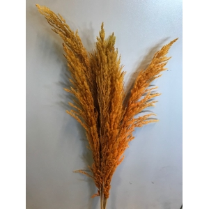 Pampas grass orange 8pc - 95cm