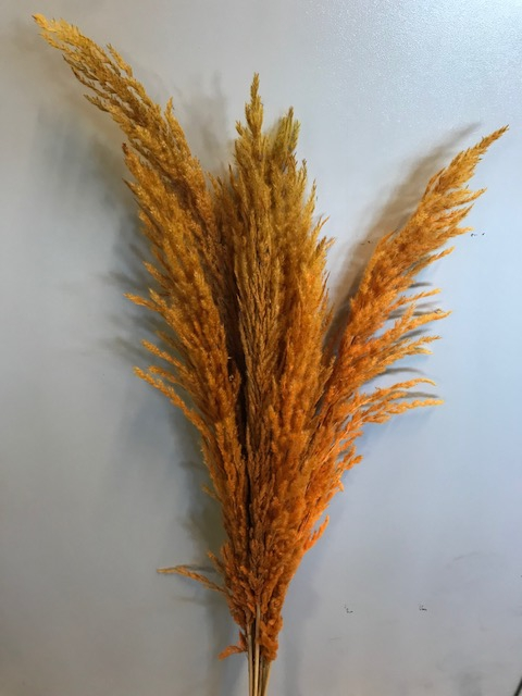 <h4>Pampas grass orange 8pc - 95cm</h4>