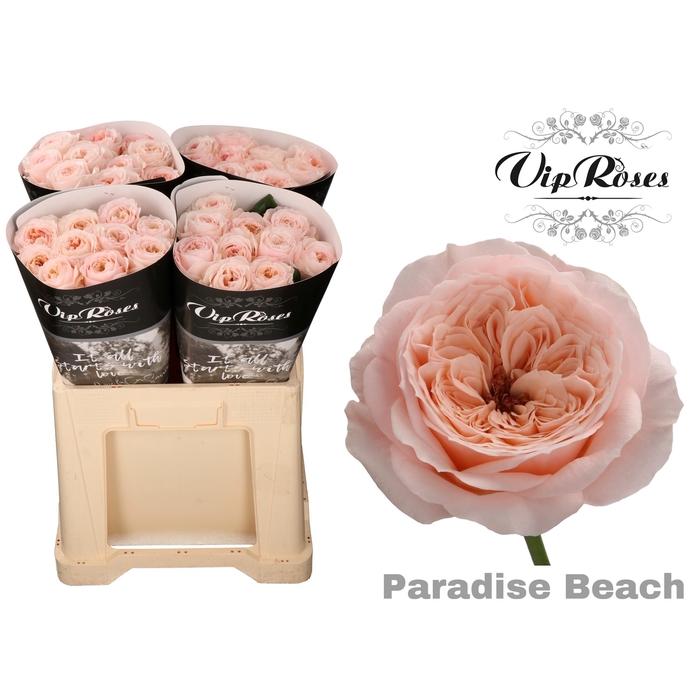 <h4>R KL PARADISE BEACH</h4>