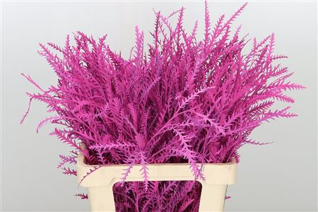 <h4>Dec Grevillea Ivanhoe Hot Pink</h4>