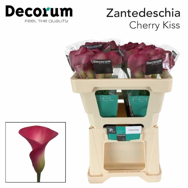 <h4>ZANT CHERRY KISS</h4>
