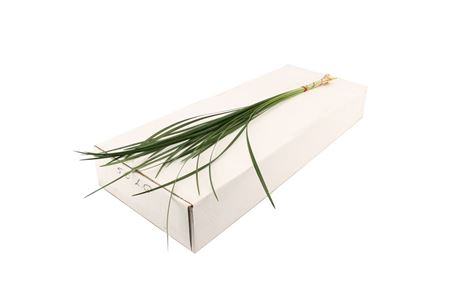 <h4>Dec Lily Grass</h4>