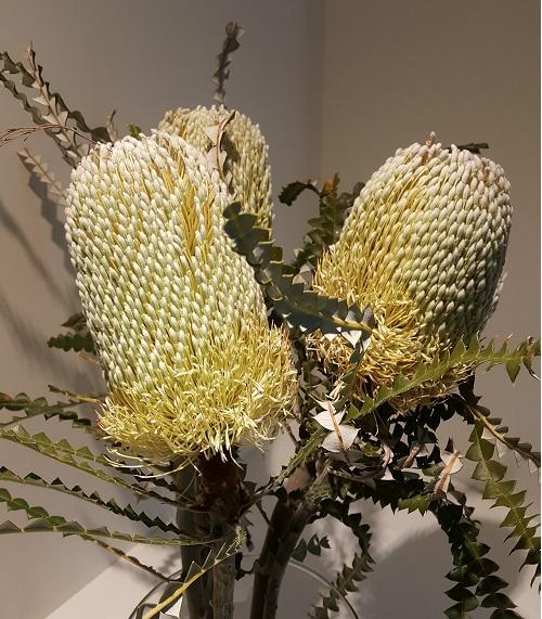 <h4>Banksia Natural Hookeriana</h4>