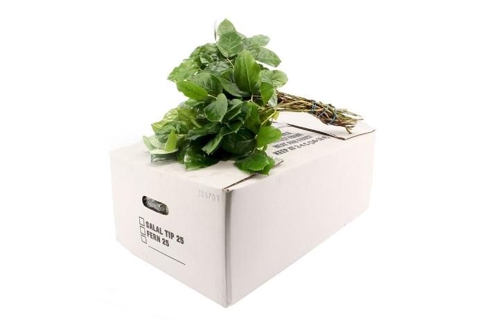 <h4>SALAL WHITE BOX ACTIE!</h4>