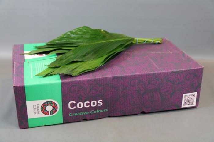<h4>Cocos XX-Large Creative Colours</h4>