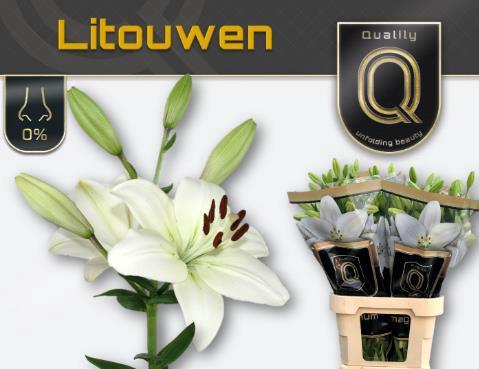 <h4>Lilium (LA-hybrids Grp) 'Litouwen'</h4>