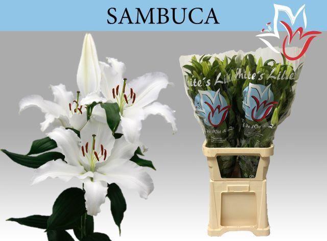 <h4>Li Or Sambuca</h4>