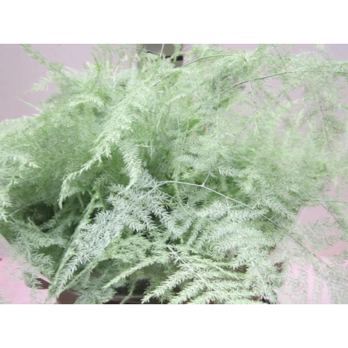 <h4>Asp Extra Veer Mint Groen</h4>